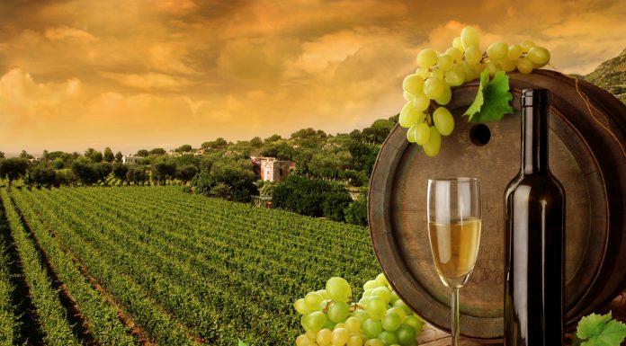 Imagen de un vino de autor