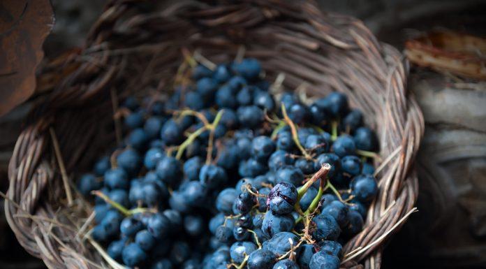 bayas y uvas para hacer vino casero
