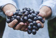 Uvas que han sido cultivadas de forma ecológica